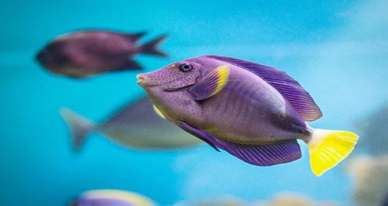 تعبیر خواب ماهی مرده در خانه از ابن سیرین و در آب زلال و مردن ماهی آکواریوم